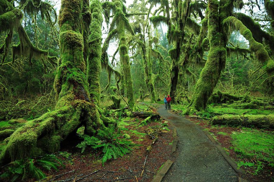Olympic Peninsula Loop